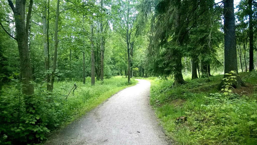 Feel sustainability in the Central Park (Forest) of Helsinki